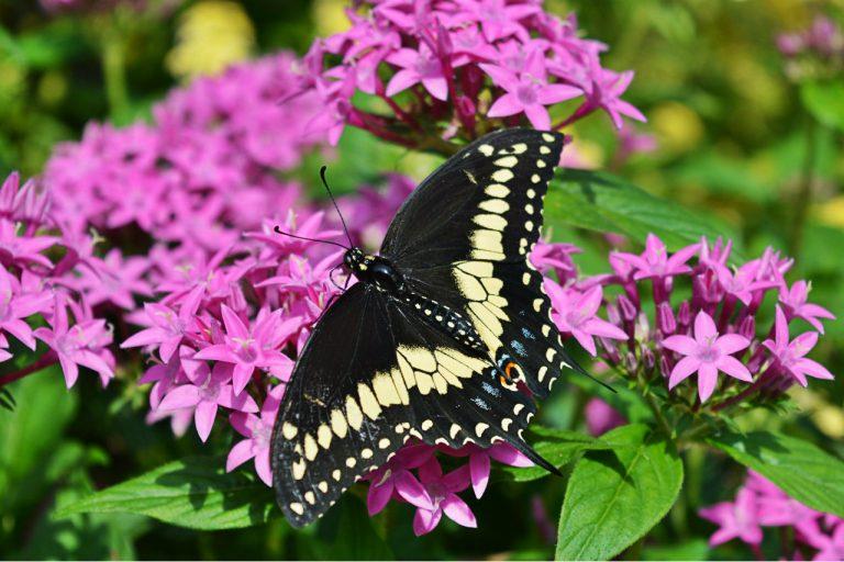 Butterfly Gardening 101